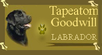 сайт лабрадора Tapeatom Goodwill вл: портяная елена